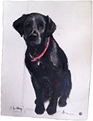 Aviva Halter Hurn Dog Portraits - Molly