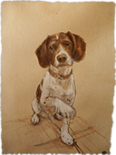 Dog Portraits -