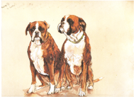 Dog Portraits - Boxers