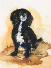 Dog Portraits - Cleodie - Cocker Spaniel