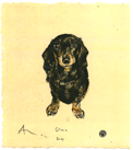 Dog Portraits - Gina - Miniature Dachshund