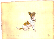 Dog Portraits - Piggy - Jack Russell